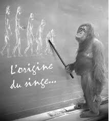 singe-origine